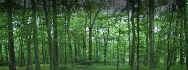 Μελέτες Διαχείρισης Δασών & Δασοτεχνικών Έργων